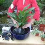 4sadnja_biljaka